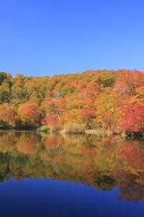秋の鎌池の写真素材 [FYI00472431]