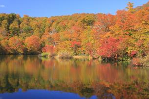 秋の鎌池の写真素材 [FYI00472432]