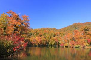 秋の鎌池の写真素材 [FYI00472433]