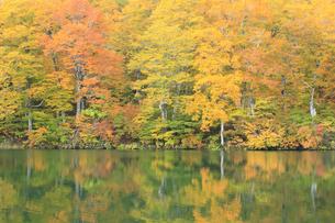 秋の鎌池の写真素材 [FYI00472434]