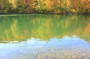 秋の鎌池の写真素材 [FYI00472444]