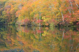 秋の鎌池の写真素材 [FYI00472446]
