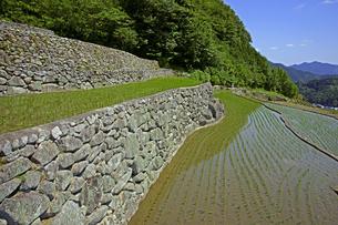 深野のだんだん田の写真素材 [FYI00472498]