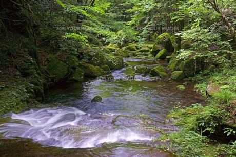 琴滝を望む 赤目四十八滝渓谷の写真素材 [FYI00472510]