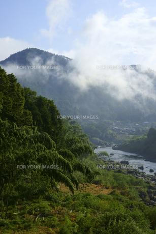 河霧が立つ長良川の写真素材 [FYI00472564]