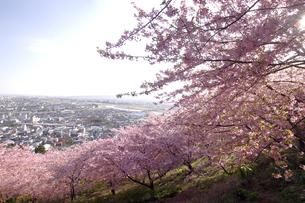 桜と眼下に広がる街並みの写真素材 [FYI00472579]