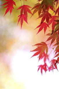 紅葉の写真素材 [FYI00472983]