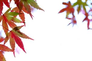 紅葉の写真素材 [FYI00473229]