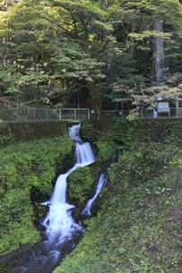箱島湧水の写真素材 [FYI00473365]