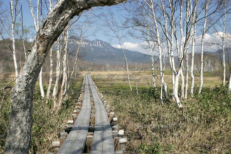 尾瀬ヶ原木道の写真素材 [FYI00473406]