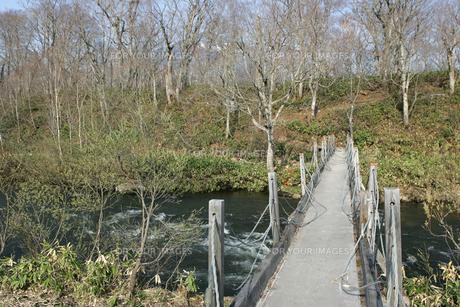 尾瀬ヶ原の橋の写真素材 [FYI00473416]