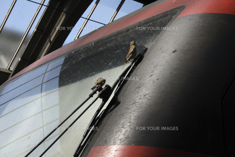 機関車のフロントウインドウに付着した虫を食べるスズメの写真素材 [FYI00473679]