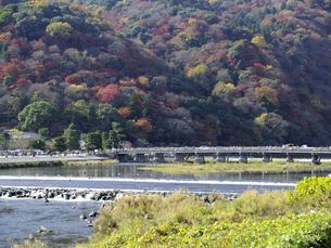 色づく嵐山と渡月橋を桂川北岸より望むの写真素材 [FYI00473724]