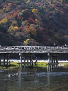 渡月橋と嵐山の色づく木々の写真素材 [FYI00473733]