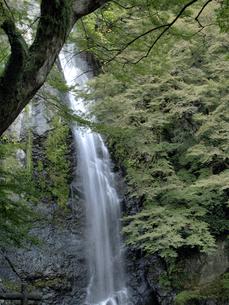 瀧見橋を渡ったところから望む箕面大滝の写真素材 [FYI00473789]