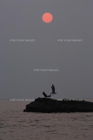 朝の海 日の出の写真素材 [FYI00473824]