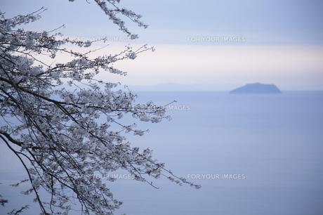 海と桜の写真素材 [FYI00473836]