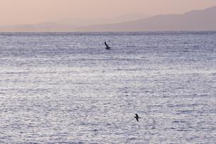 カモメと海の写真素材 [FYI00473857]