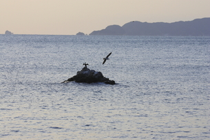 カモメと海の写真素材 [FYI00473864]