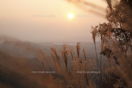 夕暮れの山並みとススキの写真素材 [FYI00473880]