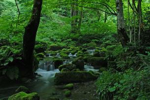 奥大山の木谷沢渓流の写真素材 [FYI00473914]