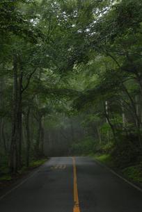 ブナ林を走る道の写真素材 [FYI00473918]