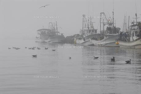 朝霧の境港の写真素材 [FYI00473938]