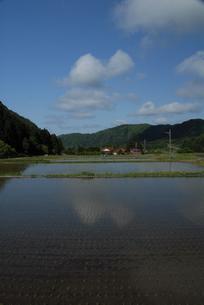 水田と青空の写真素材 [FYI00473941]