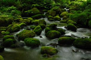 奥大山の木谷沢渓流の写真素材 [FYI00473993]