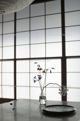 和室に飾られた花の写真素材 [FYI00474265]