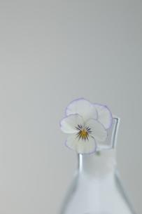 ガラス器とパンジーの写真素材 [FYI00474305]