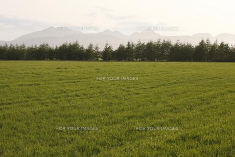 牧草地と山々の写真素材 [FYI00474376]