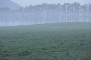朝もやとカラマツ林の写真素材 [FYI00474382]