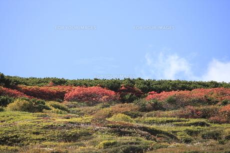 赤岳登山コース紅葉の写真素材 [FYI00474403]