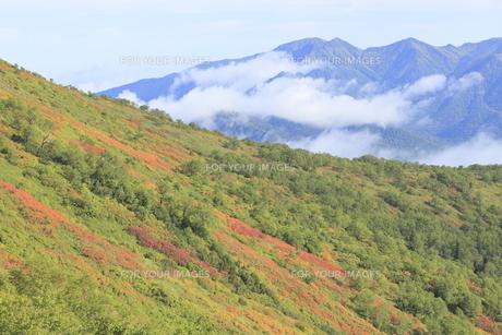 赤岳登山コース紅葉の写真素材 [FYI00474409]