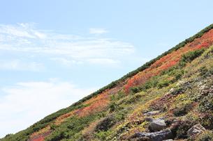 赤岳登山コース紅葉の写真素材 [FYI00474411]