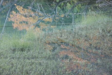 オンネトーの湖面に映った紅葉の素材 [FYI00474412]