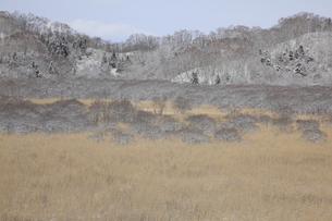 新雪が積もった湿地帯の写真素材 [FYI00474440]