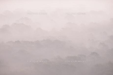 朝もやの釧路湿原の写真素材 [FYI00474494]