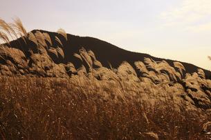 曽爾高原のススキの写真素材 [FYI00474532]