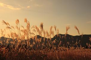 曽爾高原のススキの写真素材 [FYI00474537]