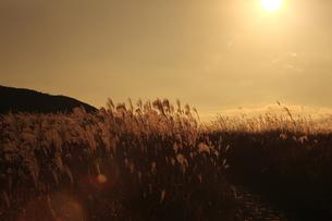 曽爾高原のススキと太陽の写真素材 [FYI00474547]