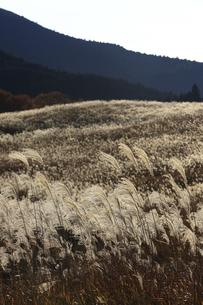 曽爾高原のススキの写真素材 [FYI00474548]