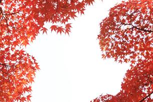 紅葉の写真素材 [FYI00474549]