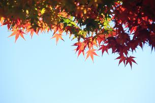 嵐山の紅葉の写真素材 [FYI00474557]