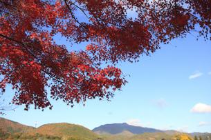 嵐山の紅葉の写真素材 [FYI00474558]