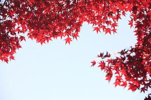 紅葉の素材 [FYI00474560]