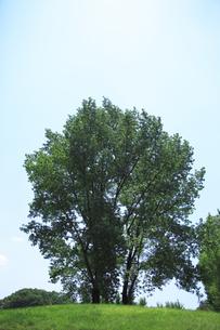 青空と新緑の木の素材 [FYI00474651]