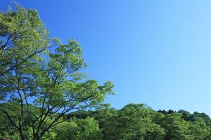 青空と新緑の木の素材 [FYI00474668]
