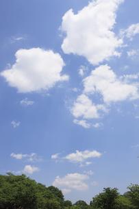 西山公園からの青空と木々の素材 [FYI00474694]
